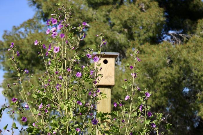 Hôtels pour insectes et nichoirs pour oiseaux vont favoriser le développement de la biodiversité et participer à la pollinisation des plantes.
