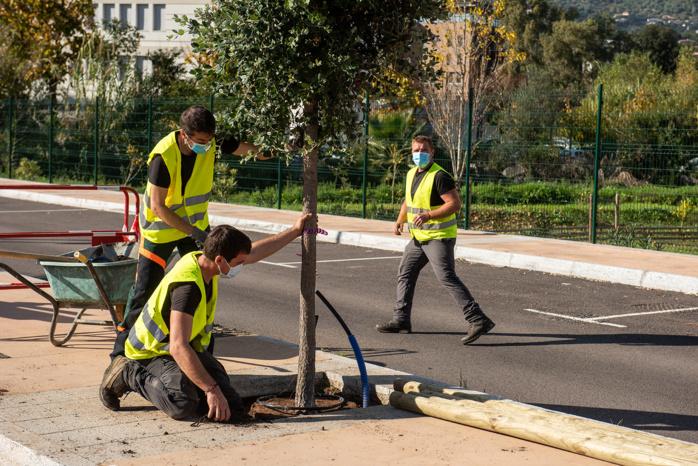 Depuis le début de la semaine l'entreprise mandatée par la Ville effectue avec soin la plantation des quelque trente essences (Ville d'Ajaccio).