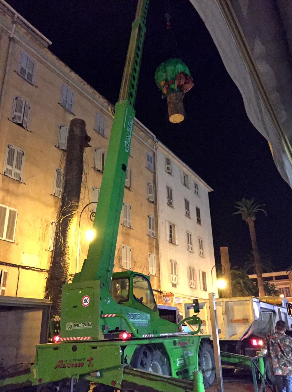 Élagage des palmiers quai Napoléon
