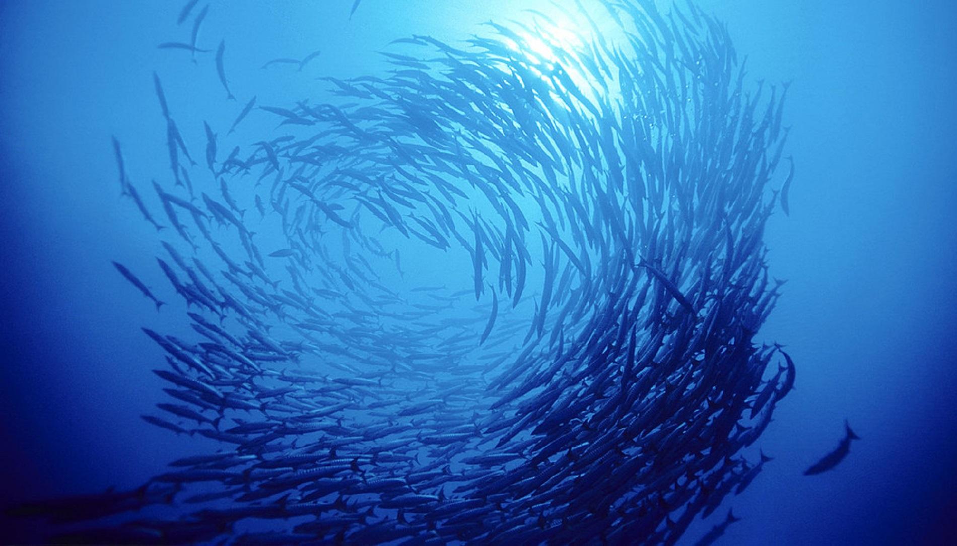 Blue Invest in the Mediterranean 2019