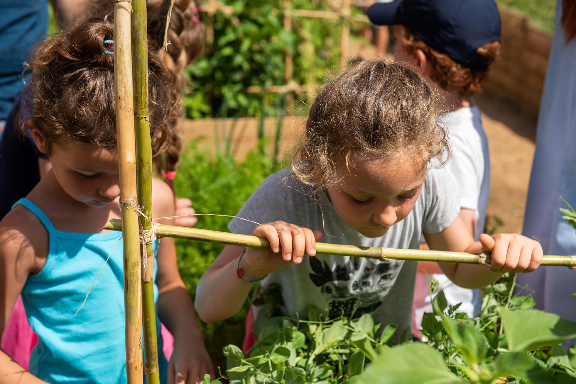 Les enfants assistent au développement des fruits et légumes du potager.