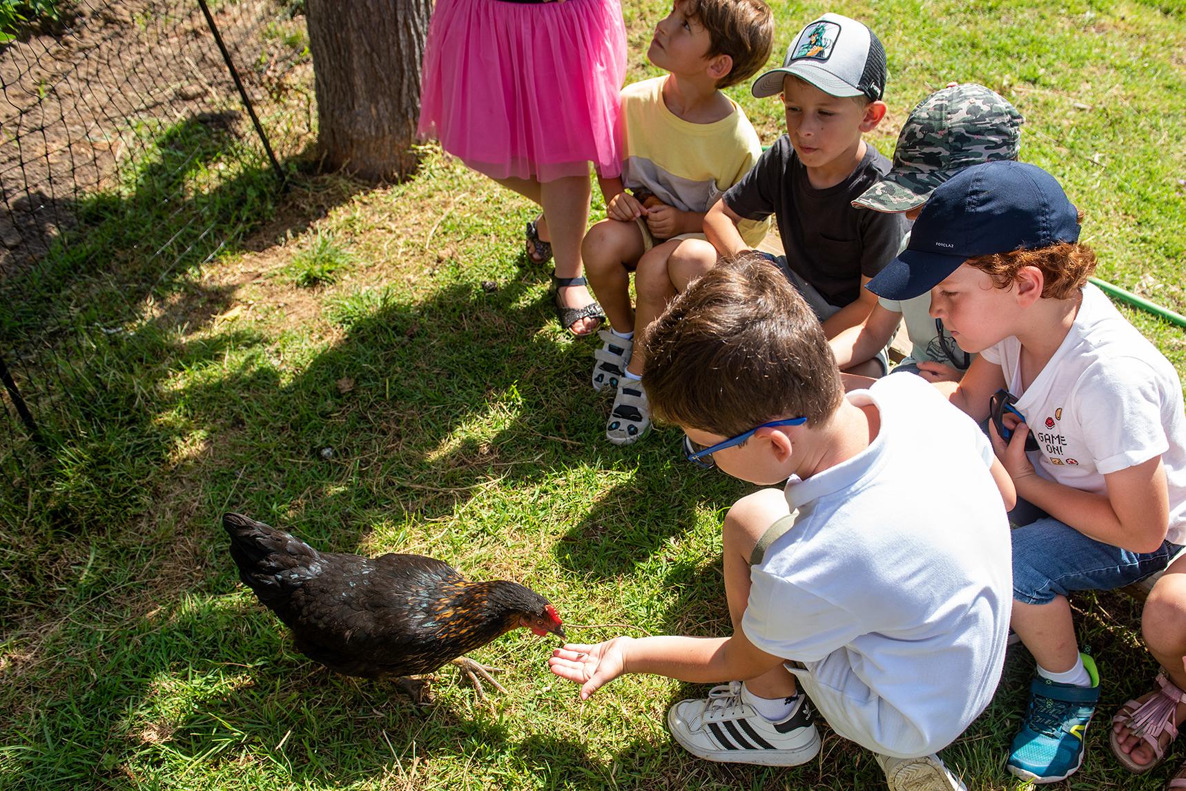 Les élèves de maternelle nourrissent aussi les poules.