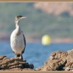 Le patrimoine Naturel, U patrimoniu Naturali