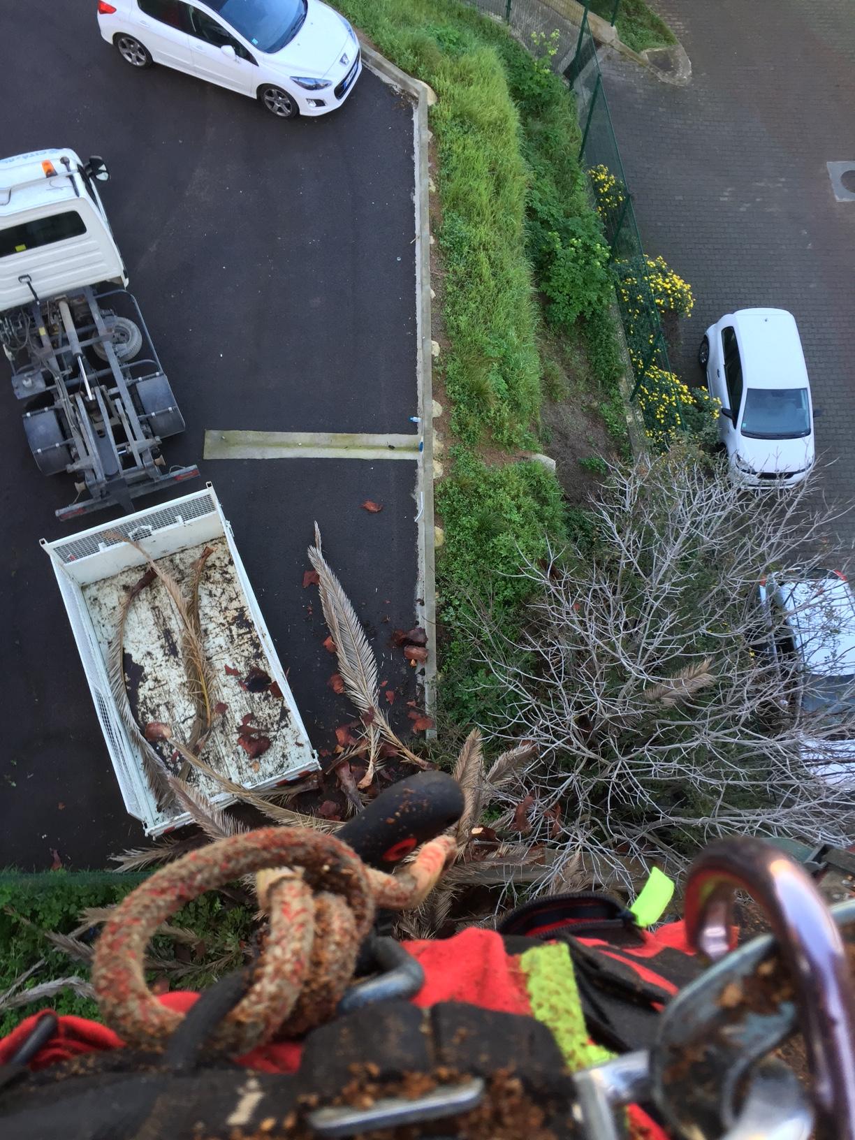 Opération de sécurisation d'un palmier éffectuée par le service des Espaces Verts.