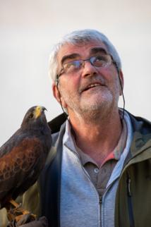 Un fauconnier contre les nuisances des étourneaux