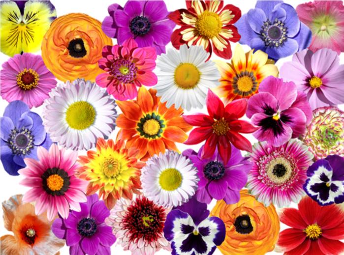 Mise à disposition d'emplacements pour l'installation de stands de vente de fleurs pour la Saint Valentin
