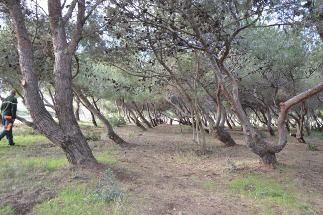 Éclaircissement de l'ensemble du sous-bois d'entrée de site.