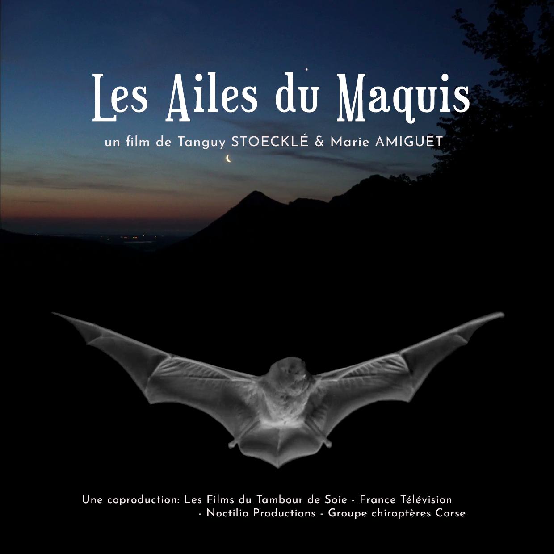 Exposition et projection documentaire sur les chauves-souris de Corse à la Médiathèque des Jardins de l'Empereur