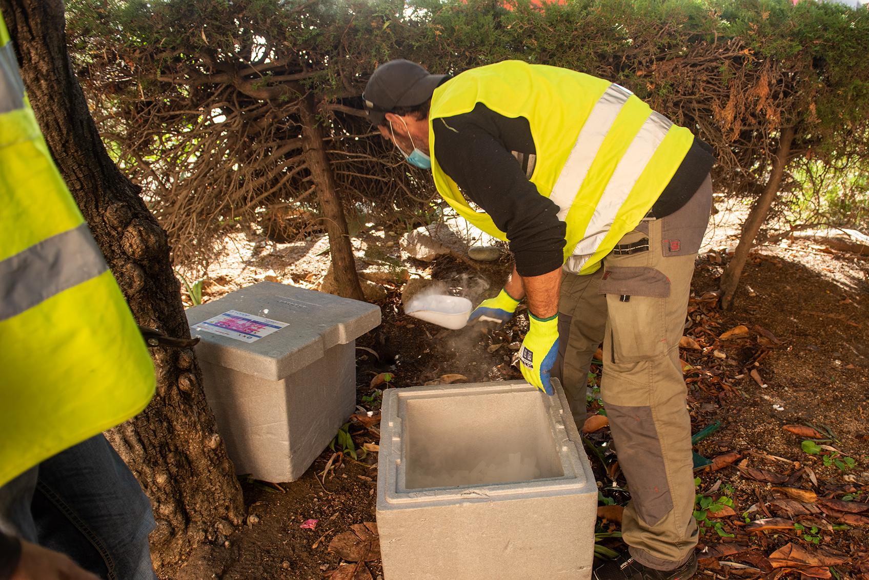 Environ 400 g de carboglace sont déposés à l'entrée des terriers d'un jardinet de Parc Berthault, sur une bande de 100m une centaine de rats ont été estimés.