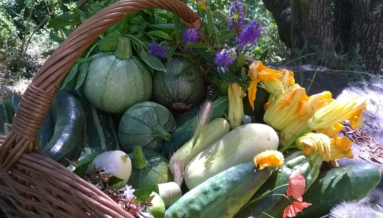 La vente des Légumes Bio des Milelli : c'est parti !
